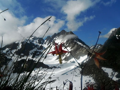 Alpine flora in Olympic Range